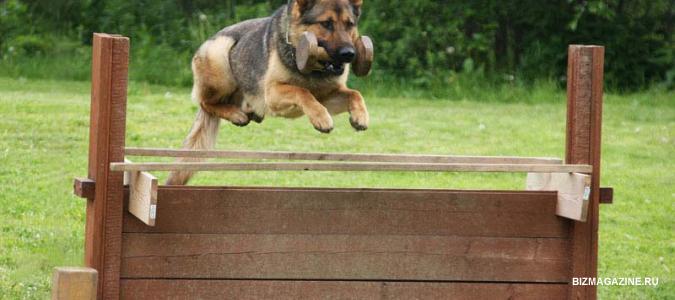 Как заработать на дрессировке собак?