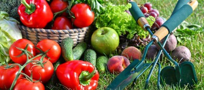 Выращивание экологически чистых овощей и фруктов