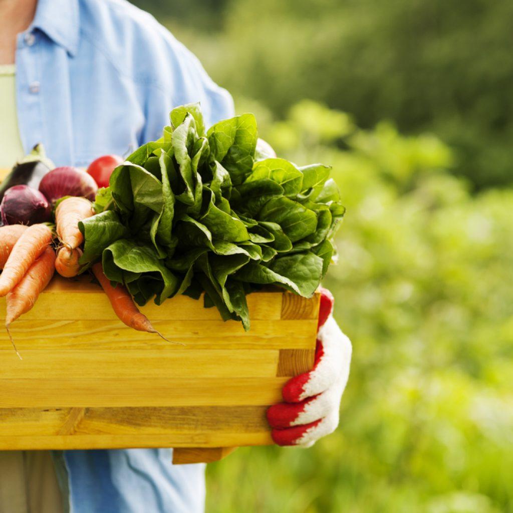 Выращивание овощных культур на даче