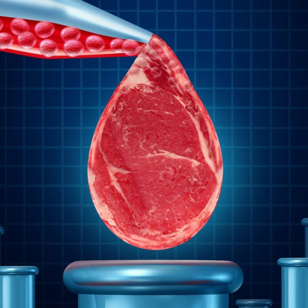 Выращивание искусственного мяса в лабораторных условиях